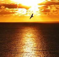 sunset_orange_ocean_eagle_background_desktop_www.Vvallpaper.net